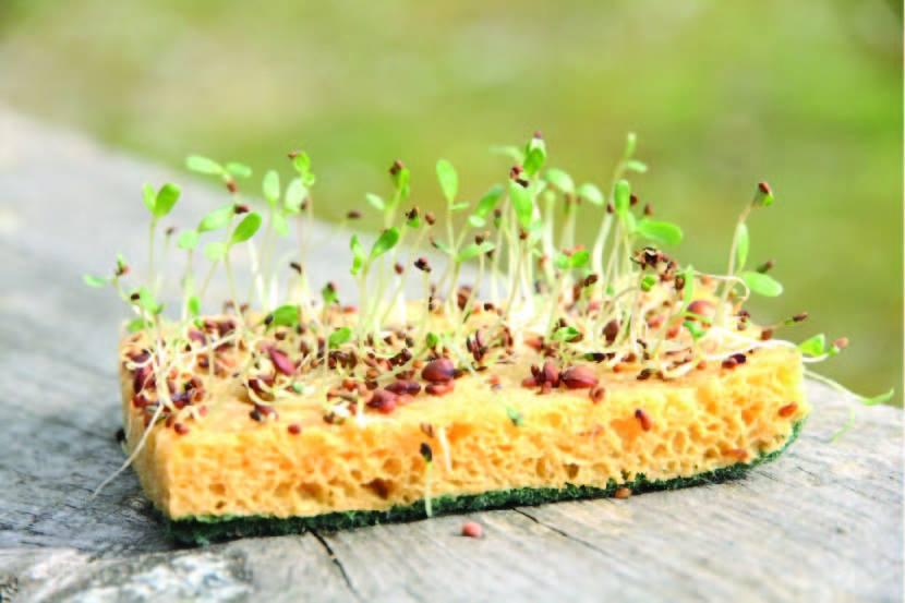 Ekologické, biologicky rozložitelné houbičky na nádobí Ecodis